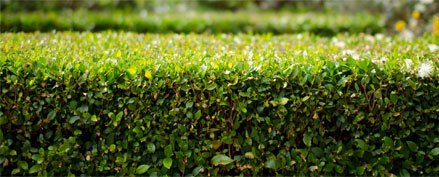 Hedge Trimming Services